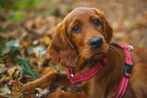 Si alguien te mira como hace este perro, no te ha entendido. Emplea el truco de la pronunciación